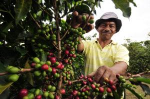Кофе из Эфиопии и Уганды